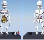 anatomini2