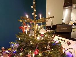 Boom In Woonkamer : Is het normaal om een boom in je woonkamer te zetten?