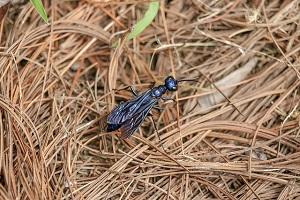 mieren vleugels bruidsvlucht