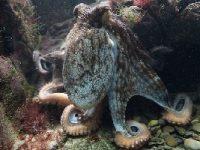 wetenschapsfraude septopus